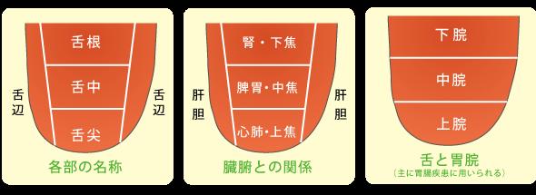 舌の名称や見方−埼玉中医薬研究会